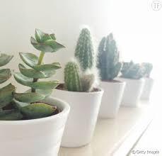 plante bureau 5 bonnes raisons de vous offrir une plante verte pour votre