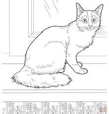 cat coloring pages exprimartdesign com