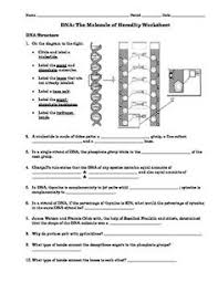 free dna worksheet discovery of dna i like this because it
