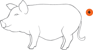 pot bellied pig learn to draw pets book