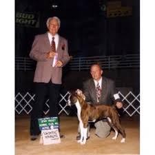 boxer dog utah eagle shine boxers boxer breeder in riverton utah