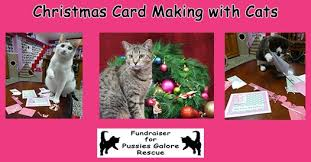 christmas card making with cats u2013 cat cuddle cafe