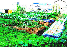 vegetable garden ideas design layout plans and patio easy simple