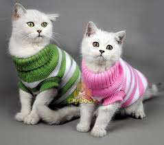 sweaters for cats cat sweaters for cats 2018 lizzy s faves