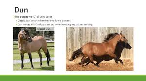 horse colors id stations base colors the extension gene colors