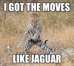 Hilarious Animal Memes - animal memes picmia