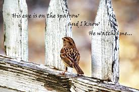 his eye is on the sparrow with quote photograph by abram house