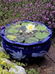 how to plant and maintain water lilies hgtv