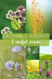 best 25 common garden weeds ideas on pinterest house insects