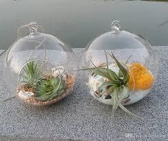 2018 globe glass terrarium kit air plant succulent terrarium