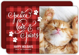cat christmas cat christmas cards cat photo christmas cards