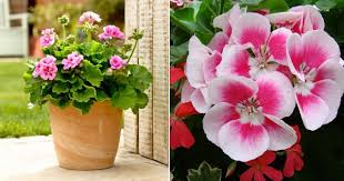 Indoor Fragrant Plants - add color u0026 scent to your home with these wonderfully scented