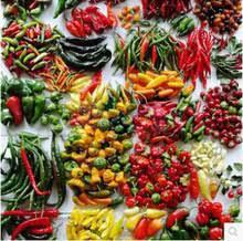 ornamental vegetables reviews shopping ornamental