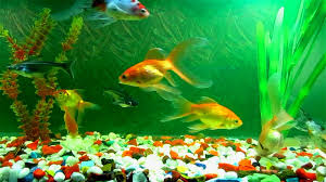 Tropical Fish Home Decor Interior Excellent Picture Of Decorative Tropical Colorful Fish