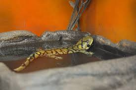 leopard gecko canadian thanksgiving weekend trip picture of