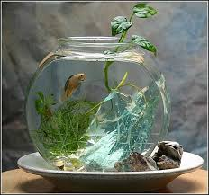 25 unique betta fish bowl ideas on betta fish tank
