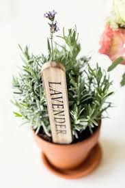 top 25 best herb centerpieces ideas on pinterest herb wedding