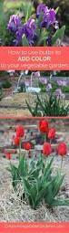 Spring Colors 1893 Best Organic Garden Inspiration Images On Pinterest Organic