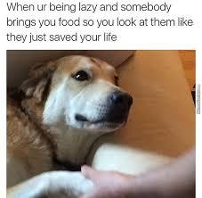 Memes Center - doggo saved yum yum food saved life lmao by otrebot meme center