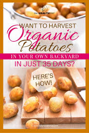 want to harvest organic potatoes in your own backyard in just 35
