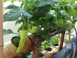 full image for vegetable garden ideas for backyard fantastic patio