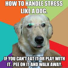Funny Stress Memes - how to handle stress like a dog if you can t eat it or play with
