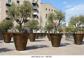 trees in pots stock photos trees in pots stock images alamy