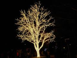 lighted tree near the italy section picture of busch gardens
