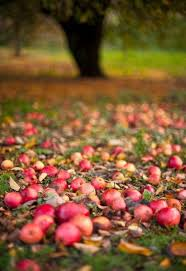 55 best fall images on pinterest fall autumn and apple harvest