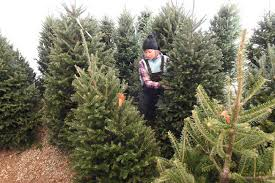 real christmas trees for sale growers and retailers give thanks for buyers of real christmas