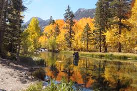 finding fall foliage eastern slope california u0027s sierra