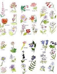 All Types Of Flowers List - flower names u2013 weneedfun