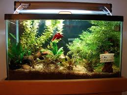 aquarium decoration ideas freshwater freshwater fish aquarium decorations aquarium design ideas