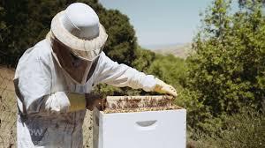 californian backyard garden beekeeping youtube