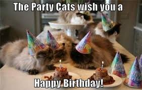Cat Happy Birthday Meme - happy birthday cat happy bday wishes for your per cat