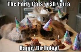 Birthday Meme Cat - happy birthday cat happy bday wishes for your per cat