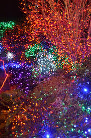 Zoo Lights Houston by On The Seventh Day Of Christmas Zoo Lights Gardening Tips
