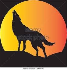 belgian shepherd howling dog howling moon stock photos u0026 dog howling moon stock images alamy