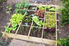 how to make a vegetable garden in a small space