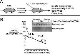 cyp2e1 drug metabolism u0026 disposition