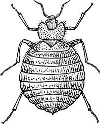 clipart of a bedbug