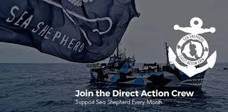 sims 3 australian shepherd template sea shepherd conservation society home