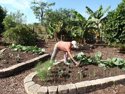 South Florida Landscaping Ideas Vegetable Gardening In South Florida Gardensdecor Com