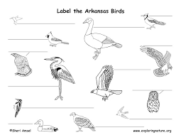 Arkansas birds images Arkansas habitats mammals birds amphibians reptiles jpg