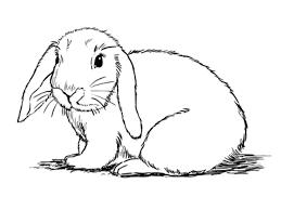 step by step animal drawing tutorials sketchbooknation com