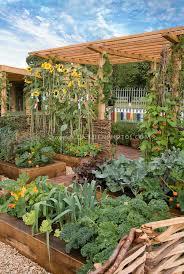 food vegetable garden raised beds sunflowers trellis blue sky