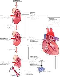 chronic kidney disease and cardiovascular risk epidemiology