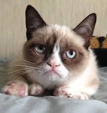 Mean Kitty Meme - grumpy cat know your meme