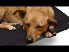 comfy dog beds from bizzy dog beds with one of kind fabrics sm