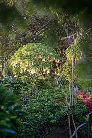in my garden wendy whiteley